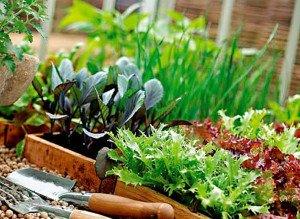 Не вырастишь овощей — не сваришь и щей
