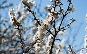 «В мае даже ветер поет» (пословица)