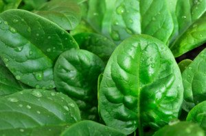 Шпинат – король среди овощей и метла для желудка
