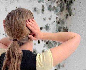 Сушим стены и боремся с плесенью и трещинами