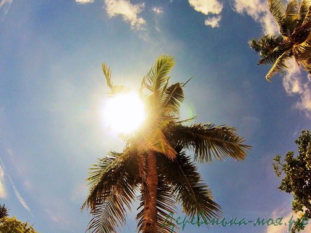 солнце и пальма