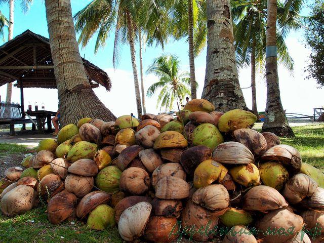 очищенный кокосовый орех