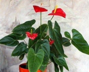 Какие цветы принесут в дом счастье