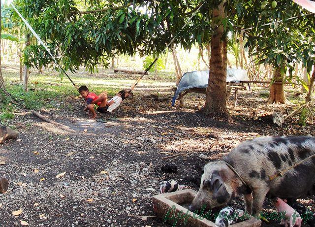 деревенское подворье на Филиппинах