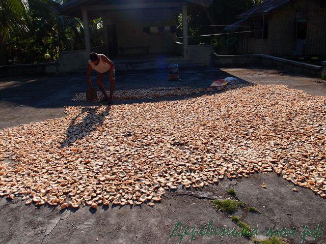 сушка кокоса