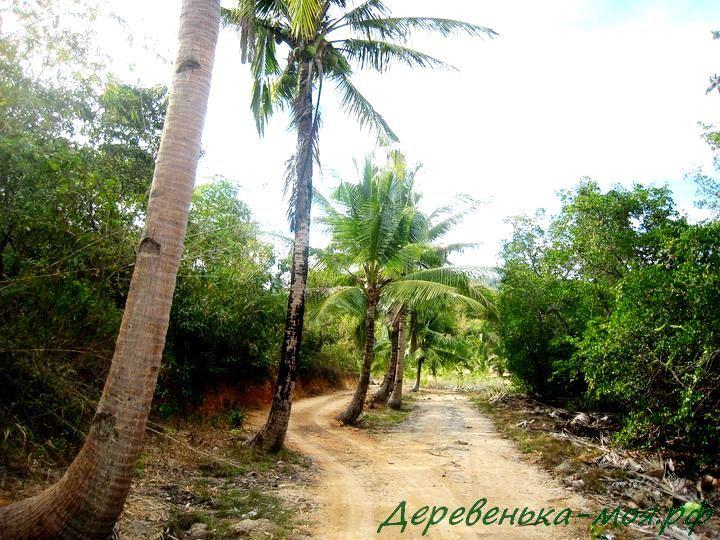 Дорога в лесу на острове Бусуанга
