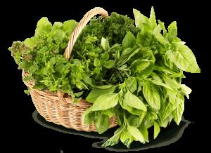 Июнь месяц – пора варить зелёные щи!
